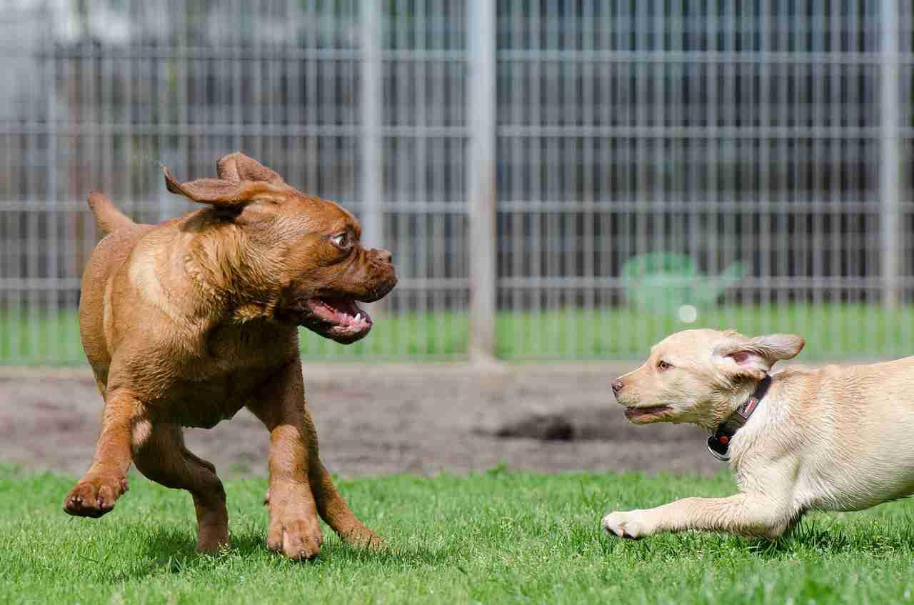 Adiestramiento canino Terapias de modificación de conducta Terapias asistidas con perros